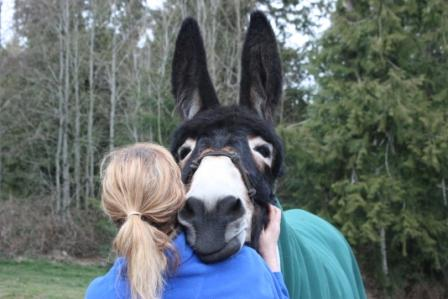 Why Do People Call Donkeys Ass?