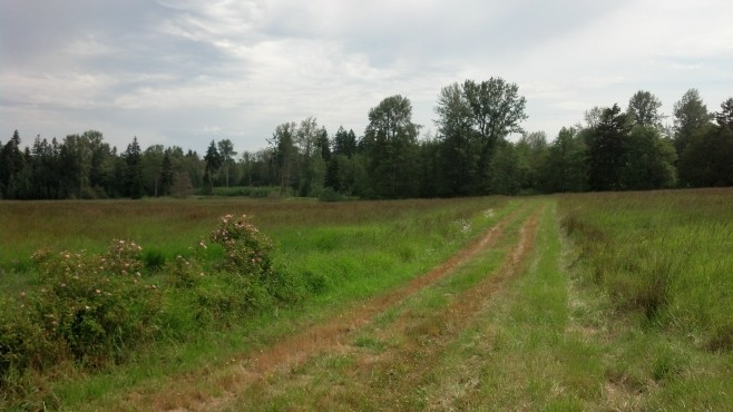 landgrass