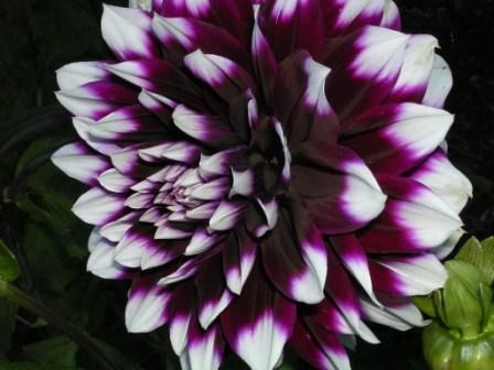 flower2003