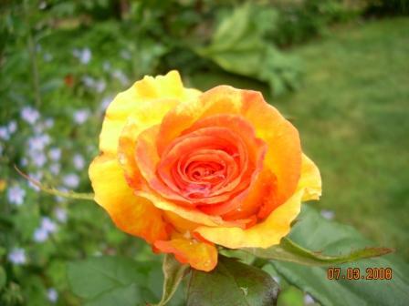 rosepretty08
