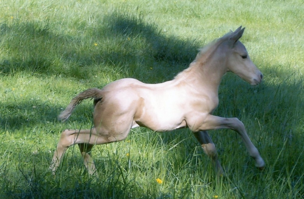 Lily As A Baby Horse