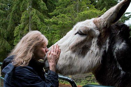 For The Love Of Donkeys - Maggots