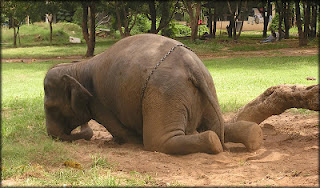 The Elephant Advocacy Needs Your Help