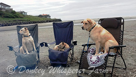 DOGGIES CAMPING