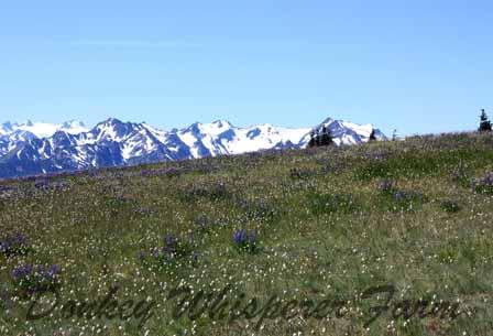 mountainsonhiuricaneridge