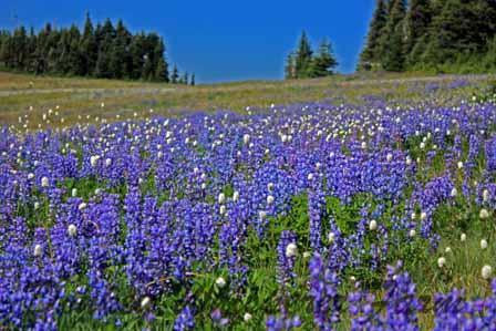 purplehazehuricaneridge