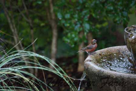wildbirdsaug2012
