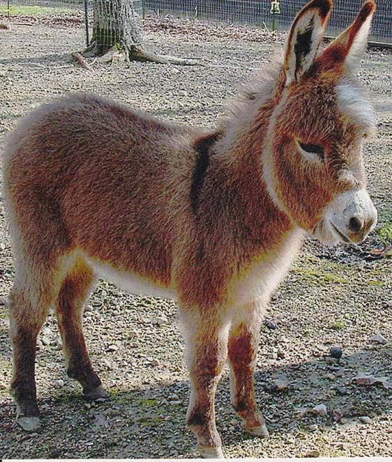 donkeycute