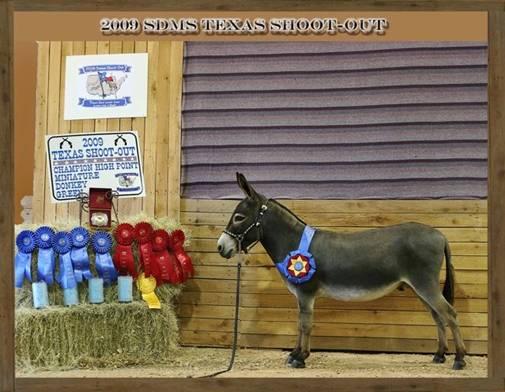 pride donkey royal