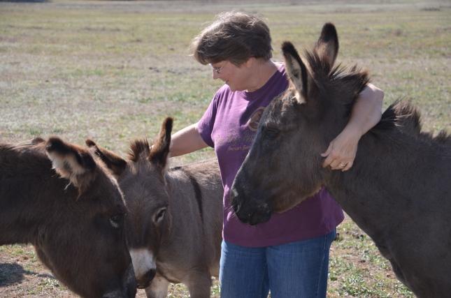 putting horse trough in 11-3-2012 053