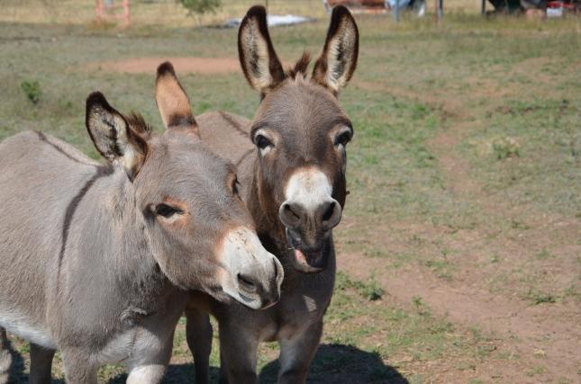 putting horse trough in 11-3-2012 084