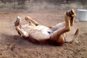 Cindys BLM donkey