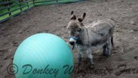 What Can My Mini Donkey Do?