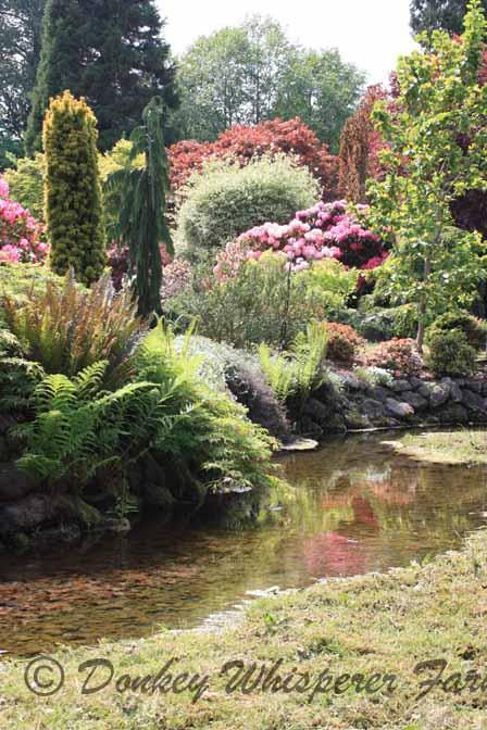 gardenbeuatywater