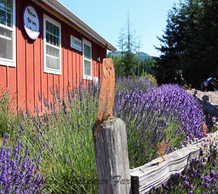 lavendarfarm22