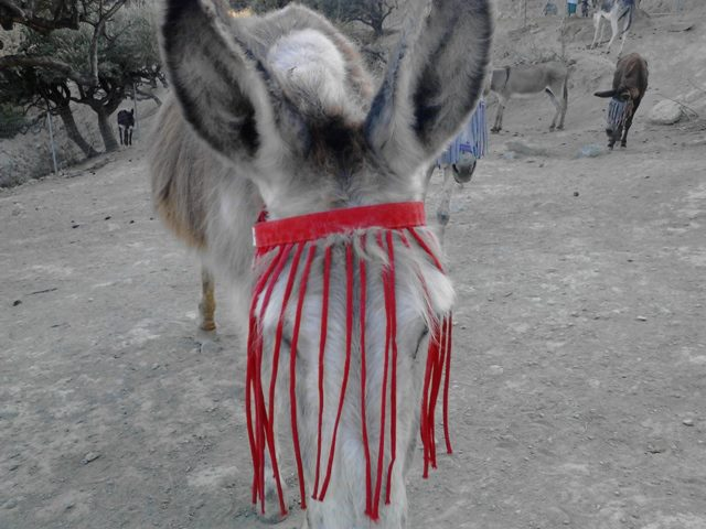 donkeyflymaskstrings