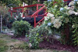 deckflowers