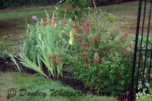 Gladsflowers