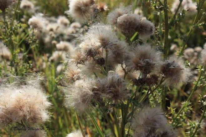 ourfarmflowers