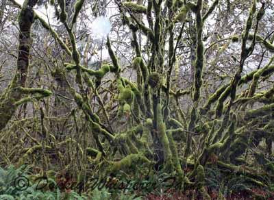 rainforest2jpg