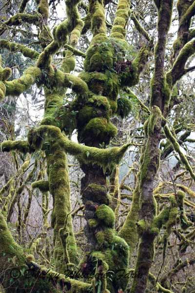 rainforestnotstree