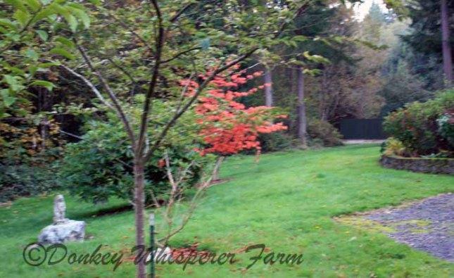 fall2013 022 - Copy - Copy