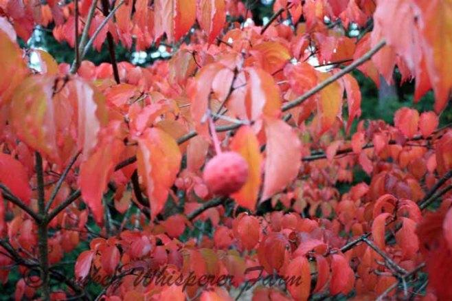 fall2013 027 - Copy