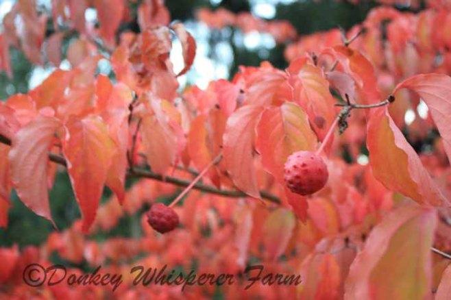 fall2013 029 - Copy