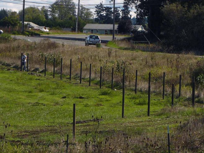 fenceposts2