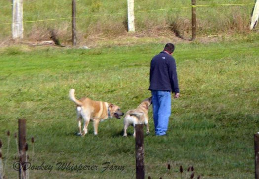scottdogssequimfarm