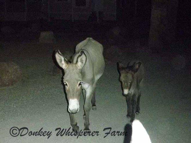 wilddonkeymommababy3