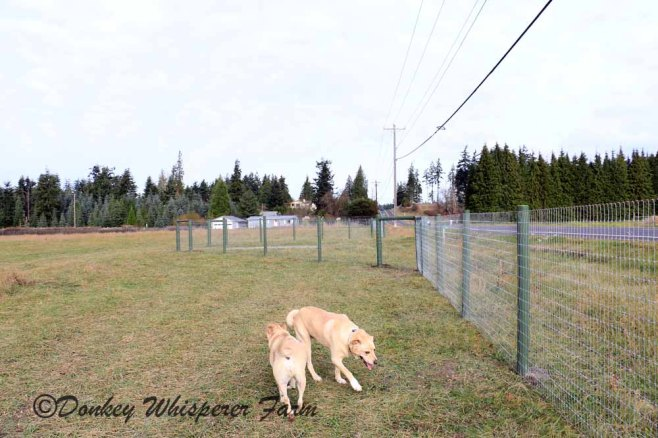 dogsnearentranceourland2013