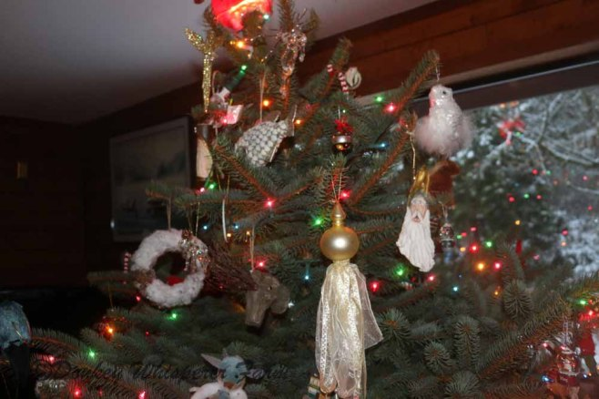 Christmas2013osystershell