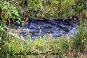 Irrigation running last October