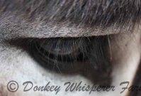I See Donkeys