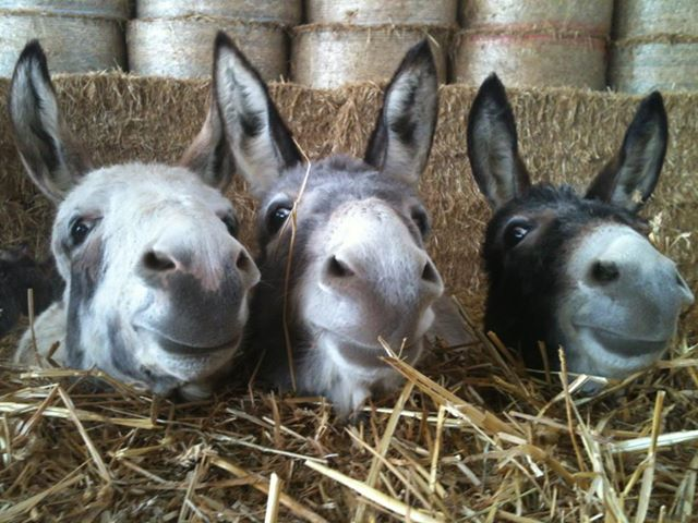 threedonkeys
