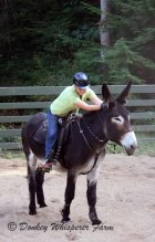 Need Help With Your Donkey, Mule or Horse?