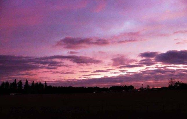 sunrisesequimfarm201333