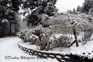 gardenflowerssnow2014