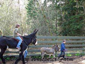 Aubree riding Rio and Xander taking Rocket Man for a walk 2014 march