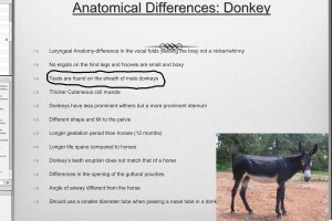 donkeyanatomydifferenceshorses