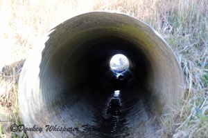 Irrigation culvert dry until April