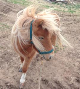 pony needs home