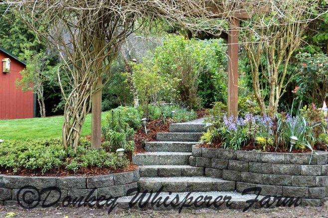 gardenwalkwayspring2014april