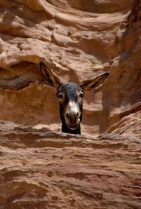 donkey face