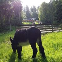 Five Acre Farm For Sale Kingston, Washington