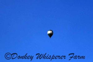 ballooncloseupfarm2014june21sequimmm