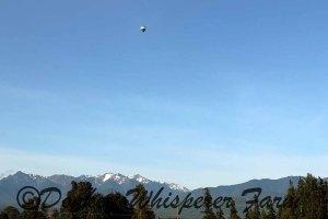 balloonmorningsequimfarm2014june21