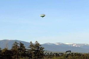 baloonmorningjune212014sequimfarm