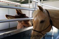 Petitions For The Wild Horses and Donkeys – Greed Sucks